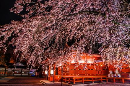 富士山本宮浅間大社拝殿脇のしだれ桜ライトアップ