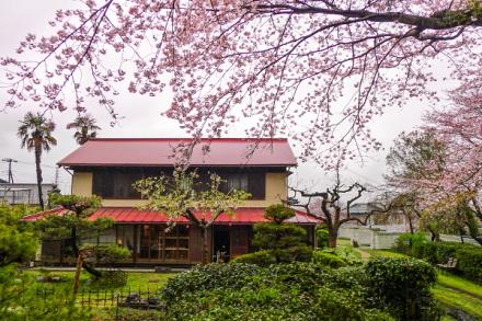 庭園の桜が見頃
