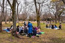 桜の木の下で飲食
