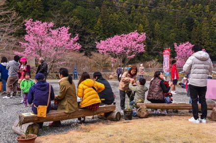 今年は早咲き桜を楽しめた「内房たけのこ・桜まつり」会場