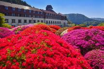 庭園のツツジとホテルの風景