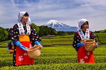 素敵な笹場の風景と茶娘を撮影