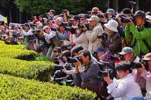 たくさんのカメラマンで賑わう