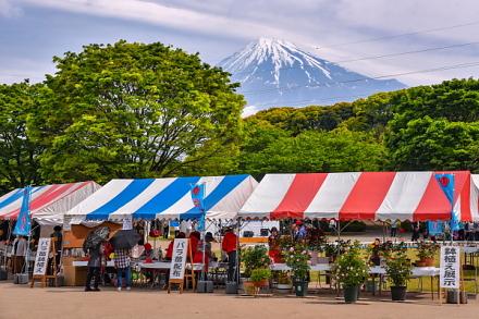 富士ばらまつり会場の中央公園