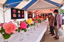 切りバラの展示