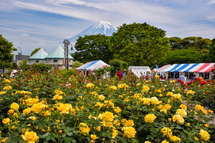 バラと富士山の風景