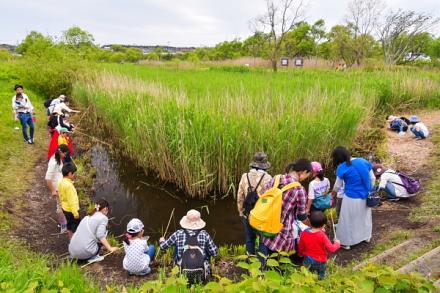 サワトラノオまつり開催の浮島ヶ原自然公園