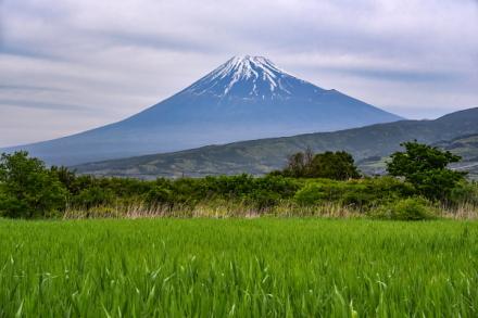 湿原から見る富士山