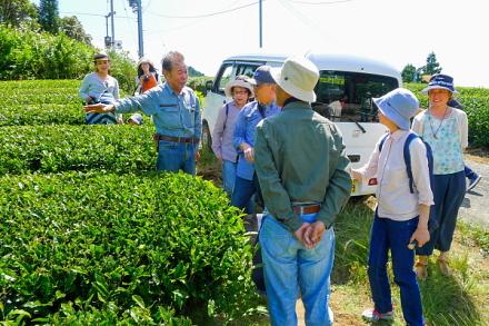 茶畑で「人と農・自然をつなぐ会の方」による説明を聞く
