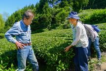 無農薬の茶畑に触れる