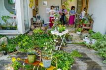 季節の花の鉢植えの販売