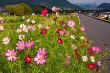 一部では3分咲き程度まで開花が進んできている