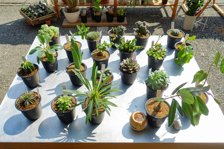 多彩な多肉植物が並ぶ