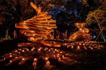 竹かぐやのほのかな灯りが浮かび上がる