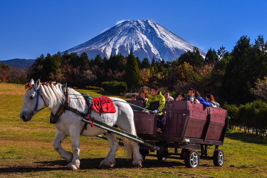 ばん馬による馬車遊覧