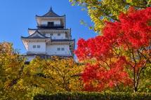 掛川城と紅葉