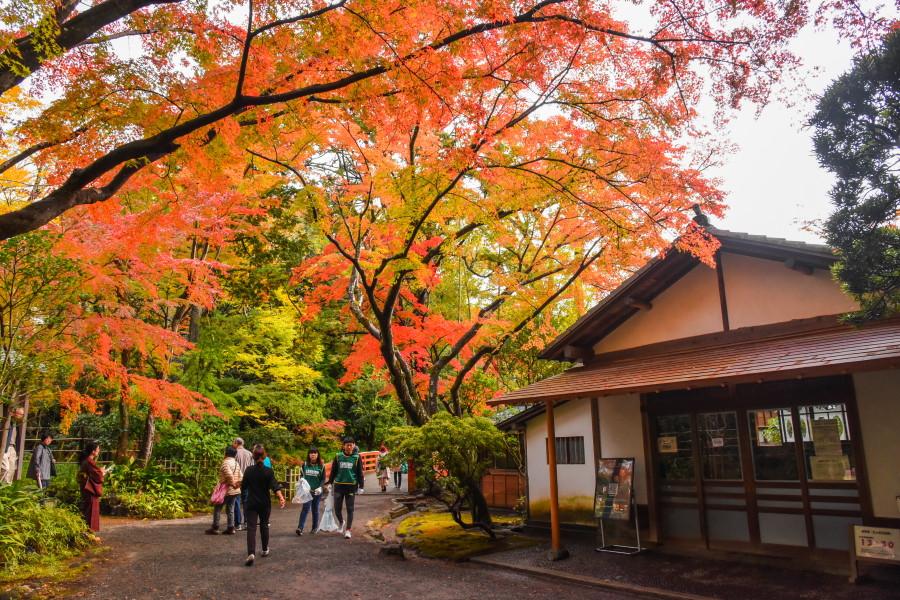 紅葉が綺麗な楽寿園