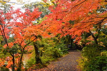 紅葉を楽しむ