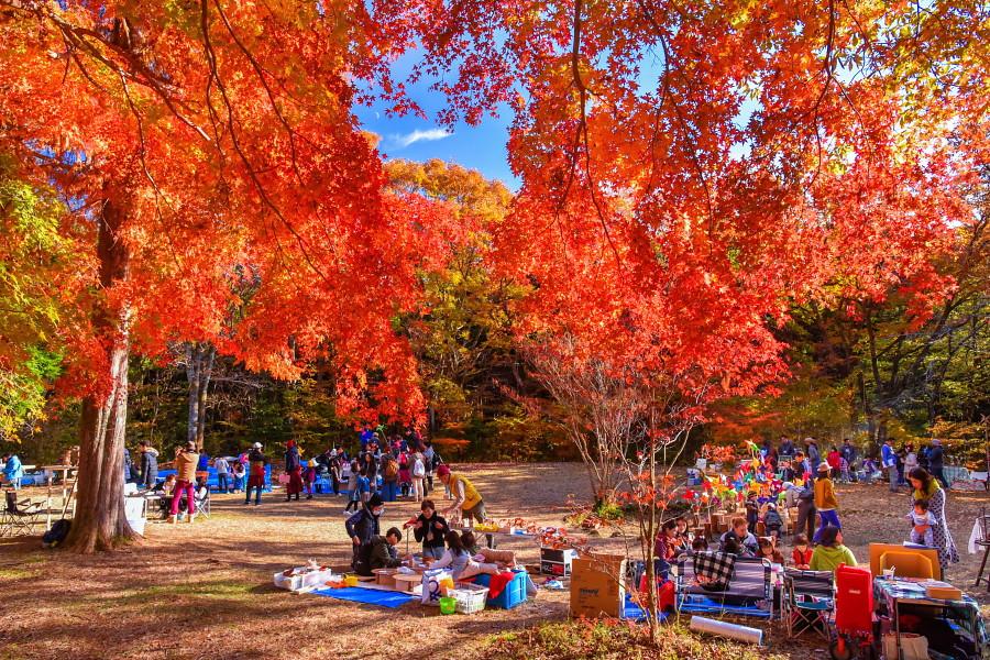 紅葉が見頃の素敵な空間