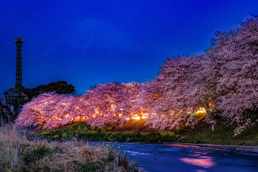 潤井川龍巌淵の夜桜
