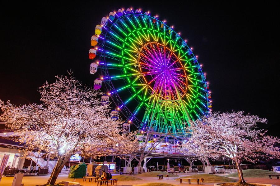 富士川SA大観覧車Fuji Sky Viewの夜桜