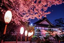 米之宮浅間神社の夜桜