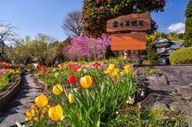 庭に咲き誇る春の花