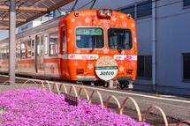 桜のラッピングを施した電車と芝桜の風景