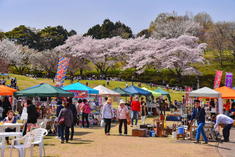 満開の桜をバックに賑わう春の市風景