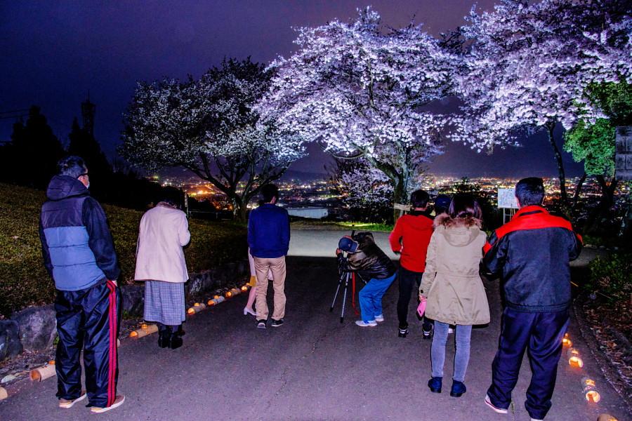 夜桜と市街地の夜景を楽しむ