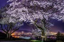 夜桜と市街地の夜景