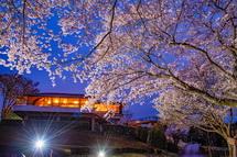 岩本山レストハウスと夜桜