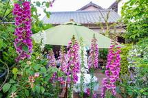 富士川地区S氏邸のオープンガーデン風景
