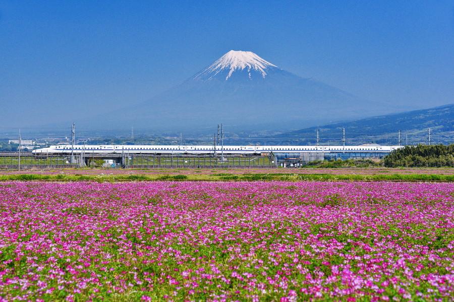 れんげ畑からの富士山と新幹線の風景