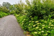 所々で開花が始まった岩本山公園