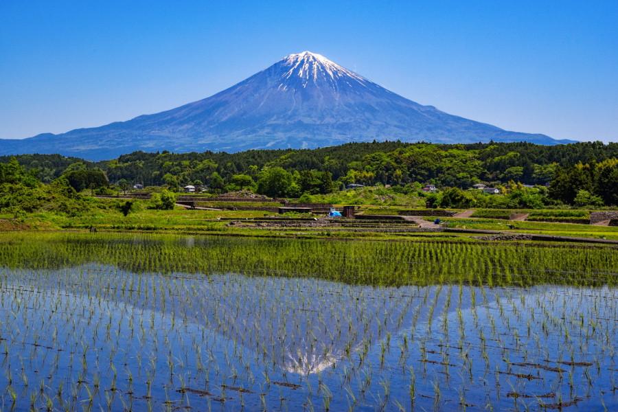 水田に映る逆さ富士