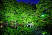 新緑の木々の映り込みが神秘的