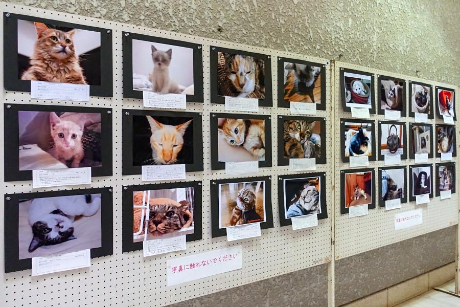 同時開催の「みんなのねこ写真展」
