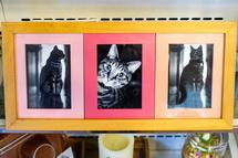 猫の写真展示