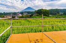 展望台からのひまわり畑と富士山の風景
