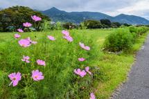 秋雨の影響か開花があまり進んでいない