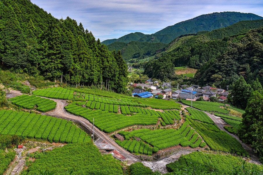 だんだん茶畑からの集落方面の眺め