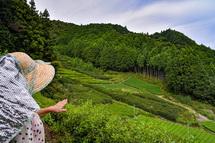 だんだん茶畑からの景観を楽しむ