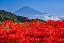彼岸花と富士山の素敵な風景