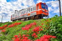 岳南電車沿線(神谷駅付近)の彼岸花風景