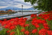 富士と港の見える公園の彼岸花風景