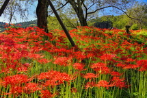 興徳寺の彼岸花風景