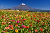 百日草などの花も見られる