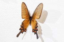 切り抜かれた蝶をズームアップ