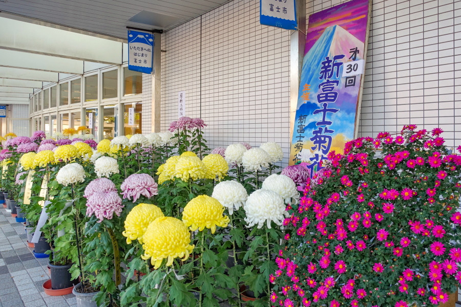 新富士駅富士山口の菊花展